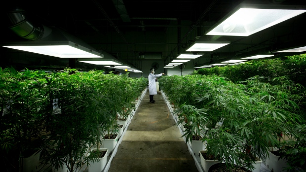 First Thai batch of medicinal cannabis